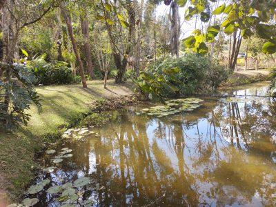 Lago com ninfeas 2